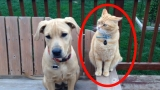Cats & Dogs WTF Moments Caught On Camera