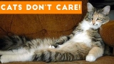 Cats Don't Care Cute Animal Compilation Video
