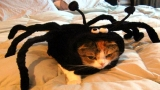 CATS HATE HALLOWEEN COLLECTION VIDEO