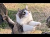 Cats Having Fun At The Beach Video