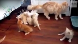 Cats in Full Panic Mode Video