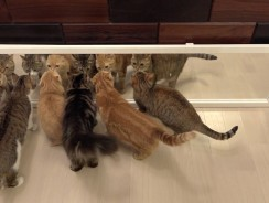 Cats in Mirrors Hilarious Reactions