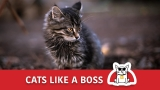 Cats like a BOSS