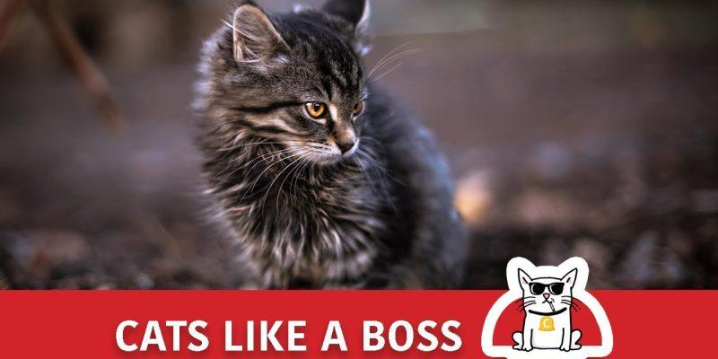 Cats like a BOSS