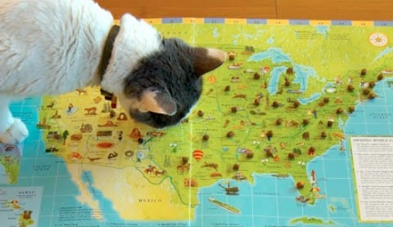 Cats Pick New Home