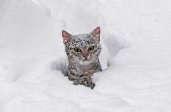 Cats Playing in Snow Compilation