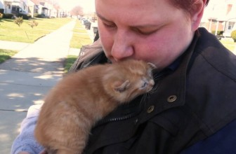Cats Rescued After Being Thrown Out of a Vehicle
