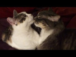 Cats Showing Valentine's Day love