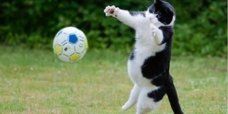 Cats, Simply The Funniest & Cutest Pets Ever! – Funny Cat Compilation