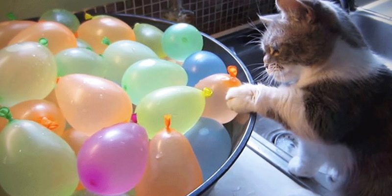 Cats VS Balloons Funny Cats Playing With Balloons