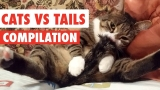 Cats Vs Tails Video Compilation 2017