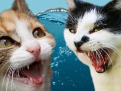 Cats Vs. Water