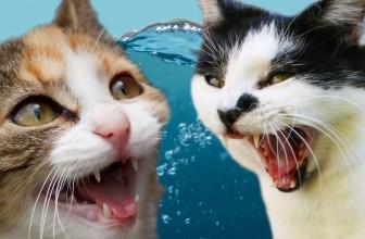 Cats Vs. Water