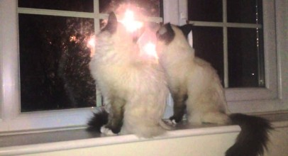 Cats Watching Fireworks Video