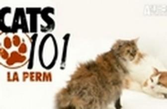 CATS 101- La Perm