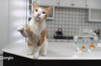 Catspiracy: Learn the truth about the ScoopFree Litter Box