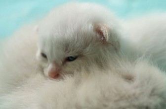 Children Discover Abandoned, Newborn Kittens in The Bushes, What They Do Next Makes Them Heroes