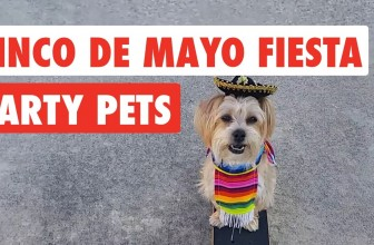 Cinco De Mayo | Fiesta Party Pets Video Compilation 2017