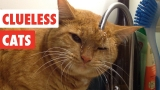 Clueless Cats | Funny Pet Video Compilation 2017