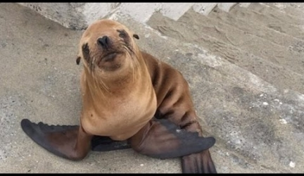 Cops Rescue Shivering Sick Sea Lion Who Tried To Cuddle With Them For Warmth