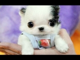 Cute Baby Animal Videos Compilation 2017