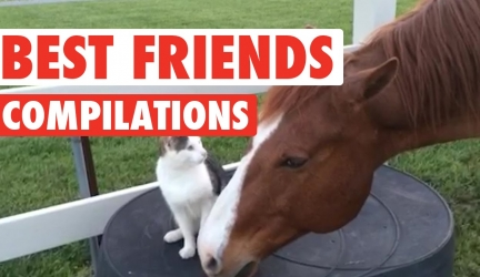 Cute BFF Pet Video Compilation 2016