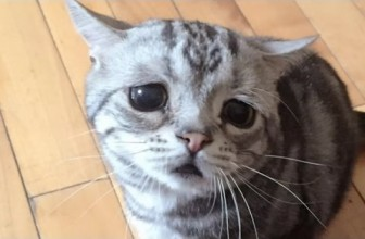 Cute Cats Begging For Food [Must See] Funny Cats Compilation