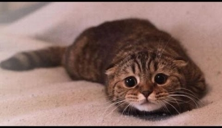 Cute Cats Feel Guilty – Funny Guilty Cat Compilation
