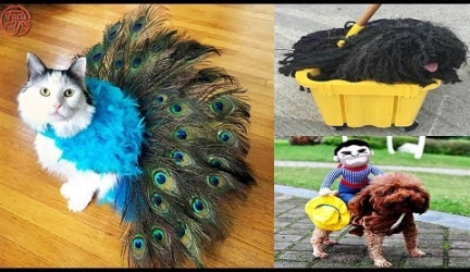 Cute Halloween Pet Costumes for Dogs & Cats