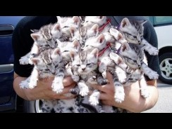 Cute Piles Of Baby Animals