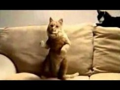 Dancing Cats Compilation