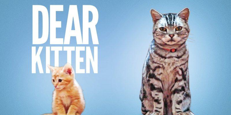 Dear Kitten Video Series