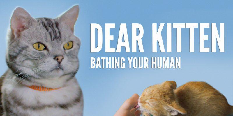 Dear Kitten Video Series: Bathing Your Human