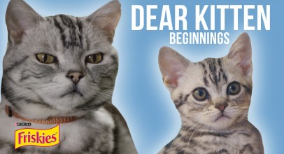 Dear Kitten Video Series: Beginnings