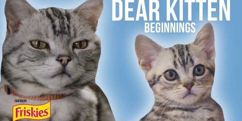 Dear Kitten Video Series: Beginnings