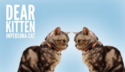 Dear Kitten Video Series: Impersona-cat
