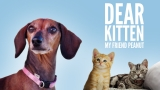 Dear Kitten Video Series: My Friend Peanut