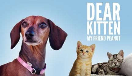 Dear Kitten Video Series: My Friend Peanut