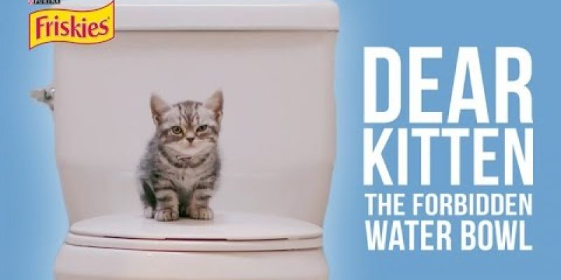 Dear Kitten Video Series: The Forbidden Water Bowl