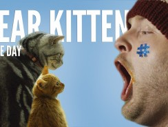 Dear Kitten Video Series: Regarding the Big Game