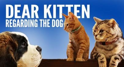 Dear Kitten Video Series: Regarding The Dog