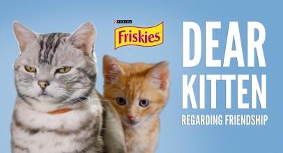 Dear Kitten Video Series: Regarding Friendship