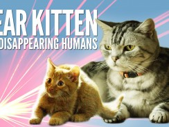 Dear Kitten Video Series: The Disappearing Humans