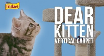 Dear Kitten Video Series: The Vertical Carpet