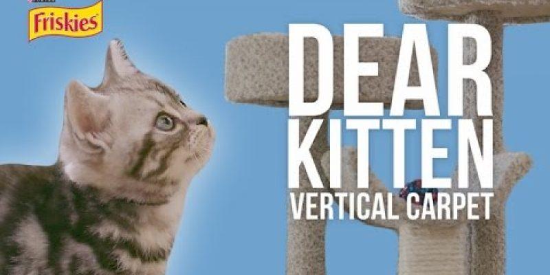 Dear Kitten Video Series: The Vertical Carpet