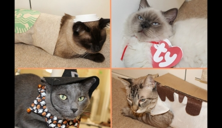 DIY Cat Halloween Costumes!