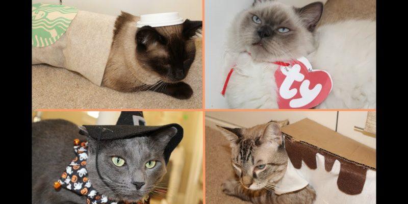 DIY Cat Halloween Costumes!