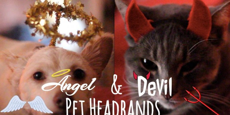 DIY Pet Halloween Costumes | Angel & Devil Headbands
