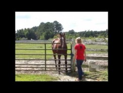 Do Horses Recognize Their Owners?
