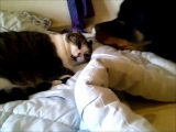 Dog Wakes Up a Cat
